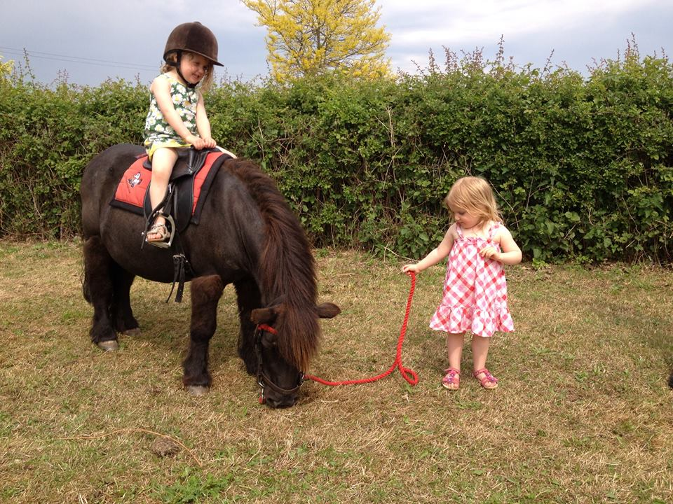 pony rides at piglets
